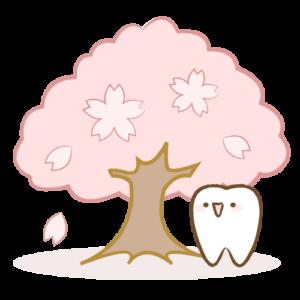 桜の下の歯