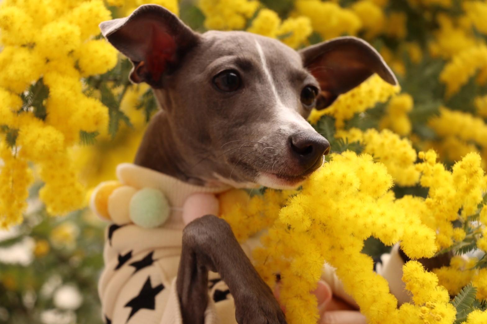 院長ブログ⑬~我が家の愛犬~のイメージ