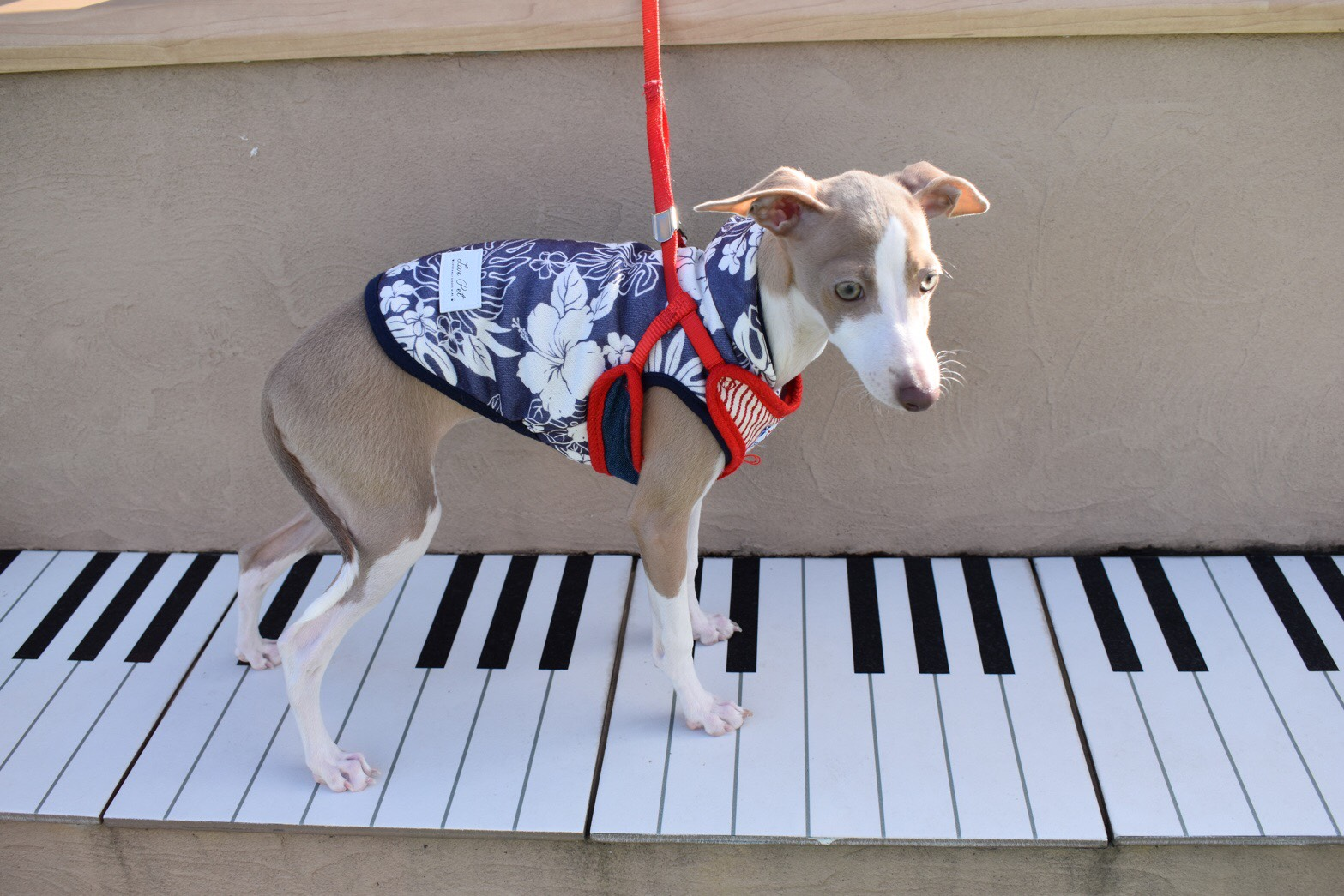 院長ブログ⑭~続・我が家の愛犬~のイメージ
